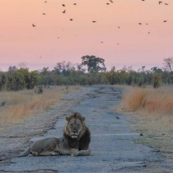Walking Safaris in Hwange National Park
