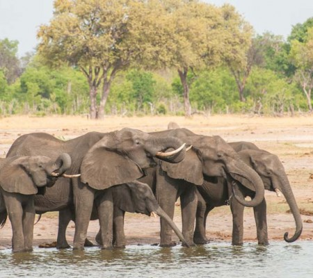 Hwange National Park - Pumping Legs for Water