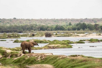 Game Drives in Zambezi National Park