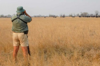 Guided Bush Walks in Hwange National Park